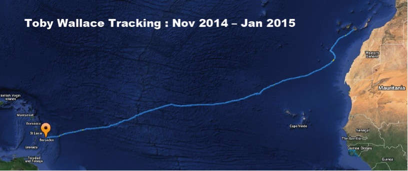 Toby Wallace Tracking Nov 14 - Jan 15